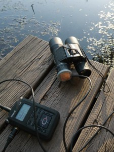 Recording Flies with a Light Listener